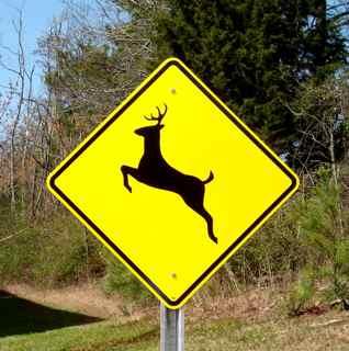 deer_signs